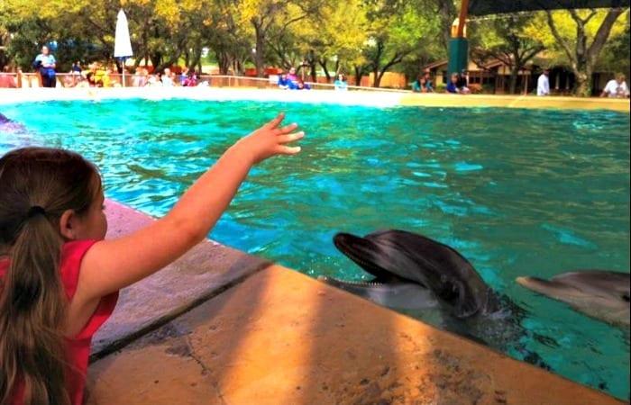 feeding dolphins at seaworld