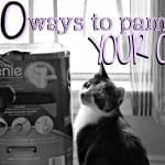 10 ways to pamper your cat