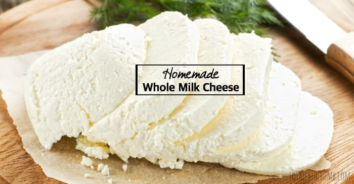homemade whole milk cheese
