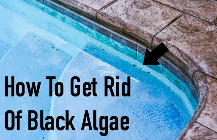 How To Get Rid Of Black Algae In Your Pool