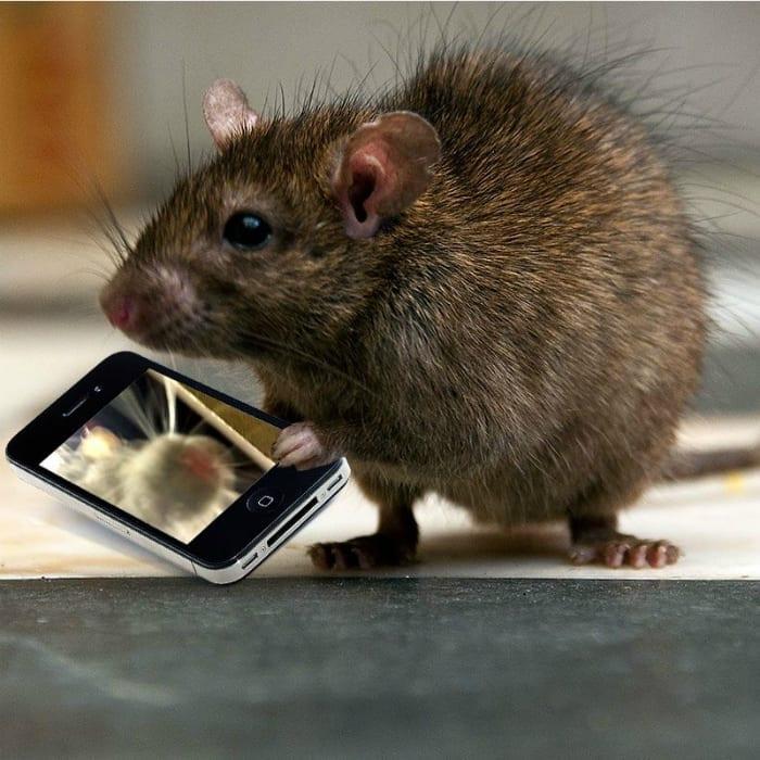 rat selfie