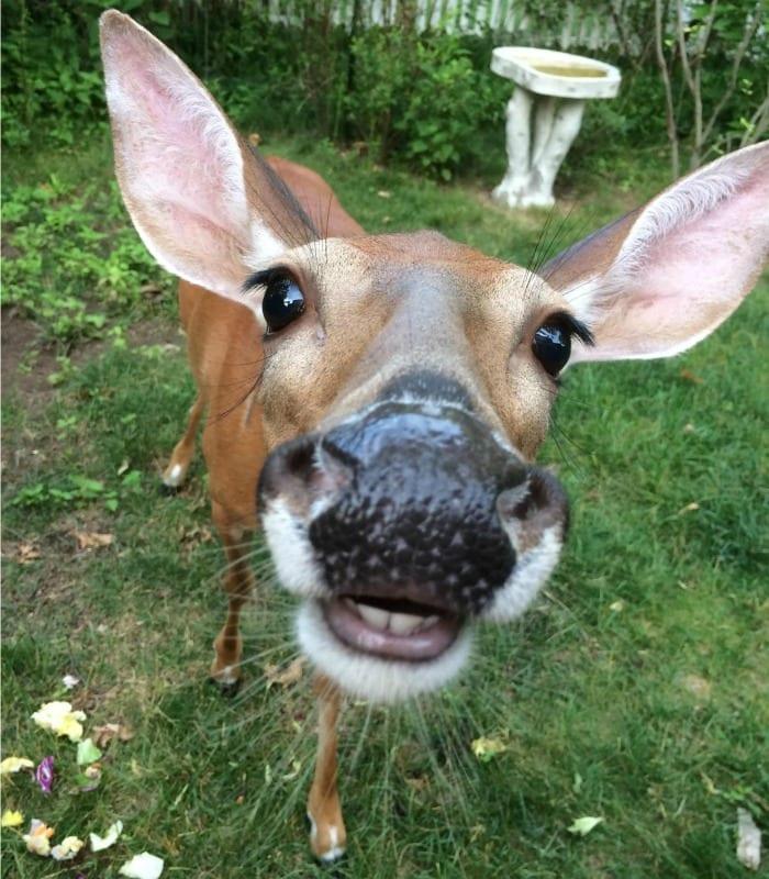 this derpy deer