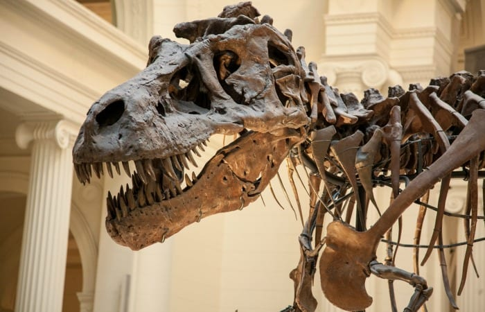 There Are People Who Don't Believe Dinosaurs Existed, And That Is Horrifying