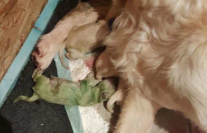 This Mama Dog Gave Birth To A Green Puppy, And I'm Freaking Out!