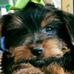 10 Cutest Dogs To Follow On Instagram!