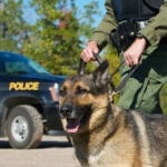 Hundreds of Drug Sniffing Dogs May Be Euthanized and The Reason is Absurd