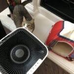 The Super Secret Key To Fresh Air Indoors