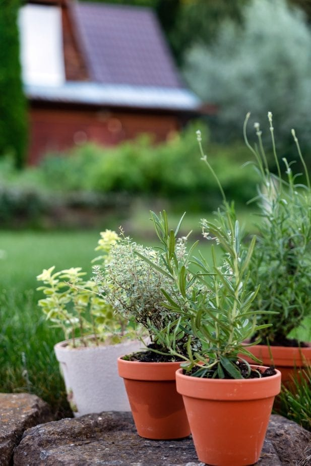 When it comes to making your patio an inviting entertaining space you can't go wrong with surrounding your space with plenty of live plants.  #gardening #patiogardening #patiogarden #patioplants