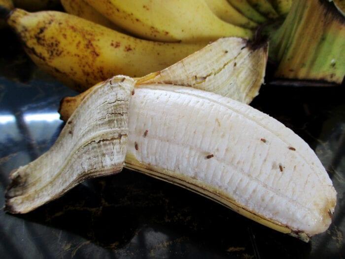 how do you keep fruit flies away from your fruit