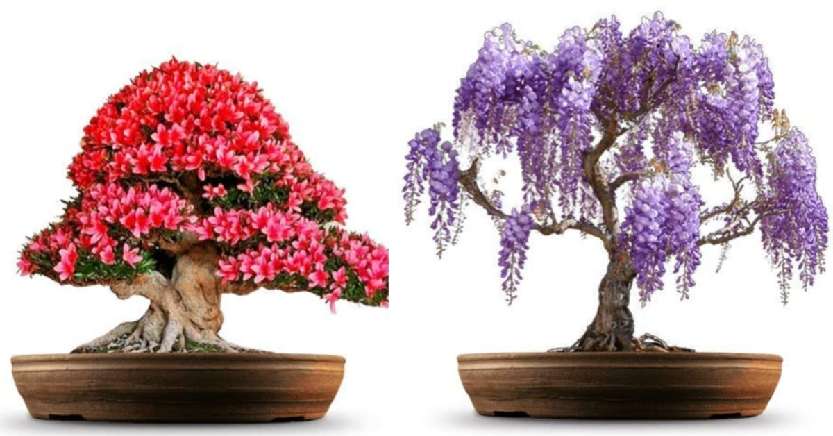 You Can Get A Grow Your Own Bonsai Tree Kit That Grows Four Different Types Of Trees