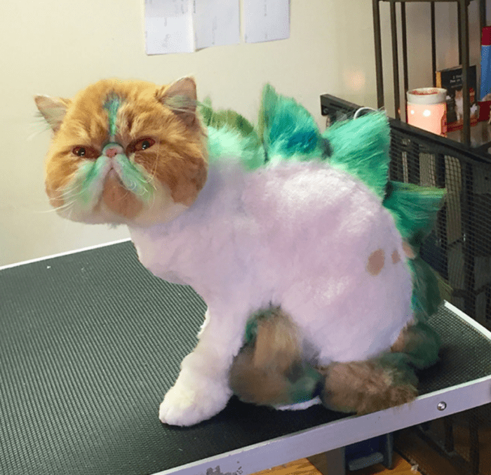 Dinosaur Cat Haircuts Are The New Grooming Trend And I'm Not Sure How To  Feel