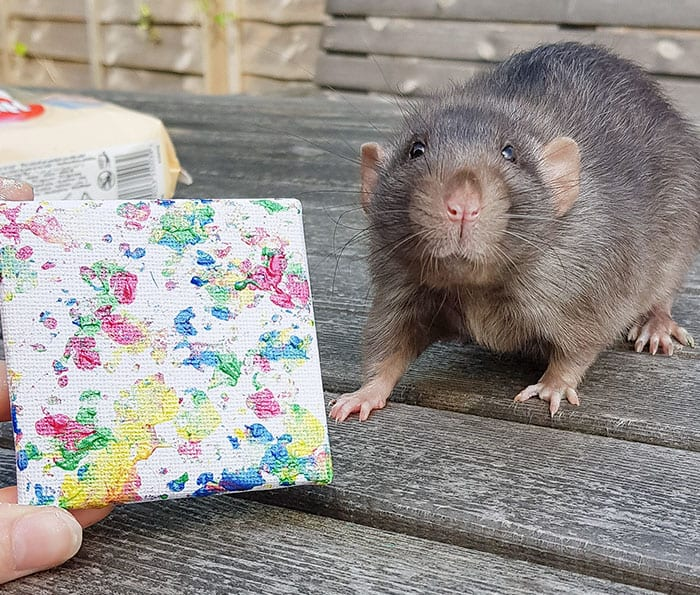 These Cute Rats Create Tiny Paintings And They Keep Selling Out Now I Want One