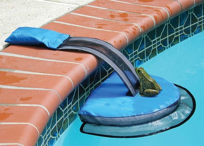 Pool Ramp that Saves Animals from Drowning