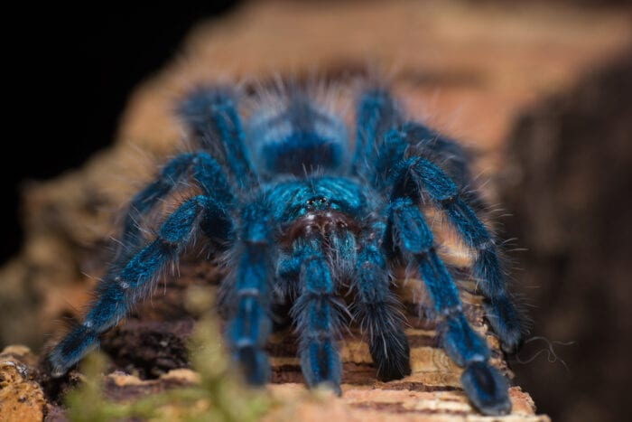 I Just Found Out Tarantulas Can Swim And I M Traumatized Now More Than Ever